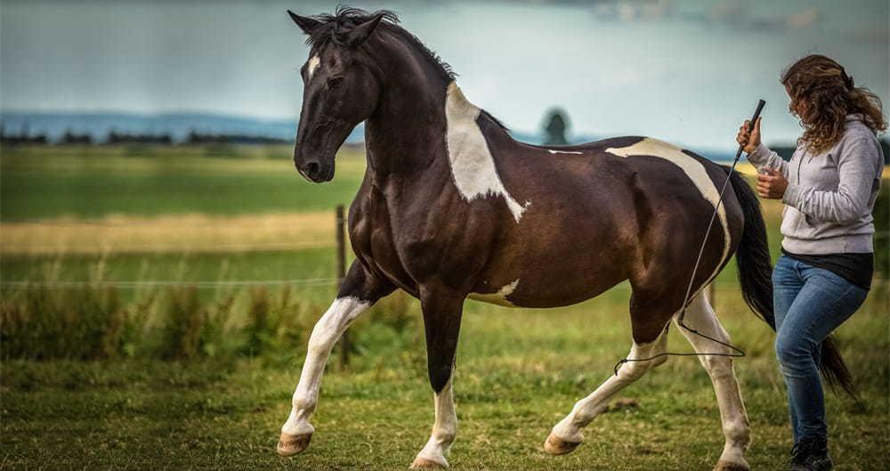 Horsemanship Pferdetraining