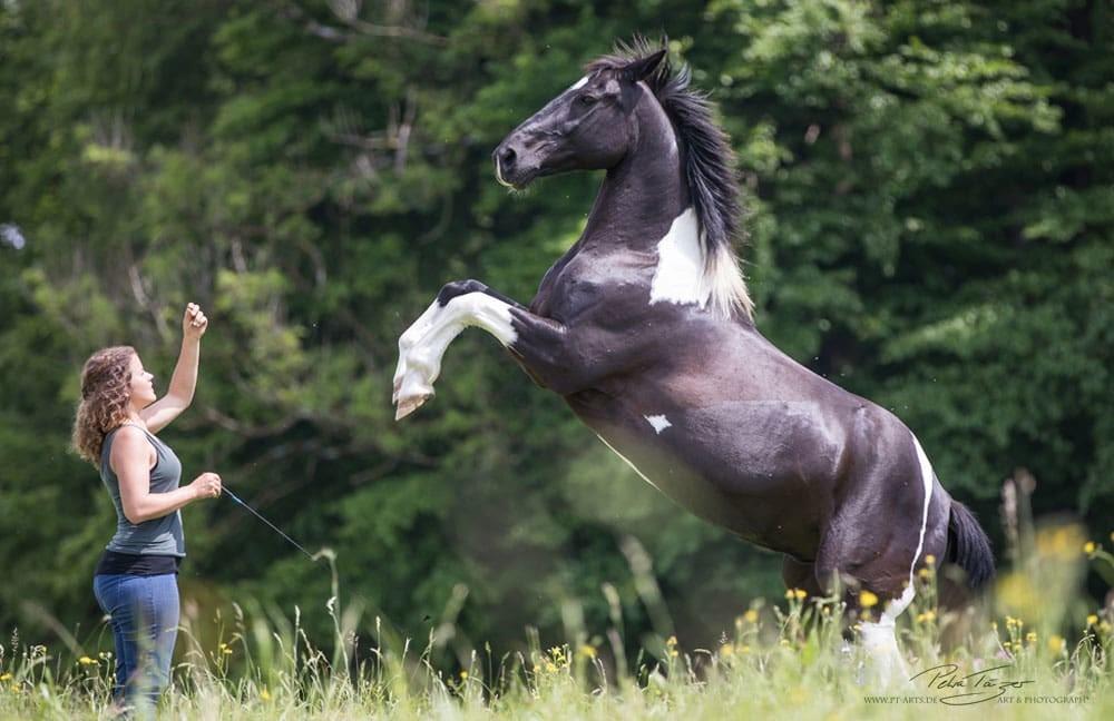 Pferdetraining Geser