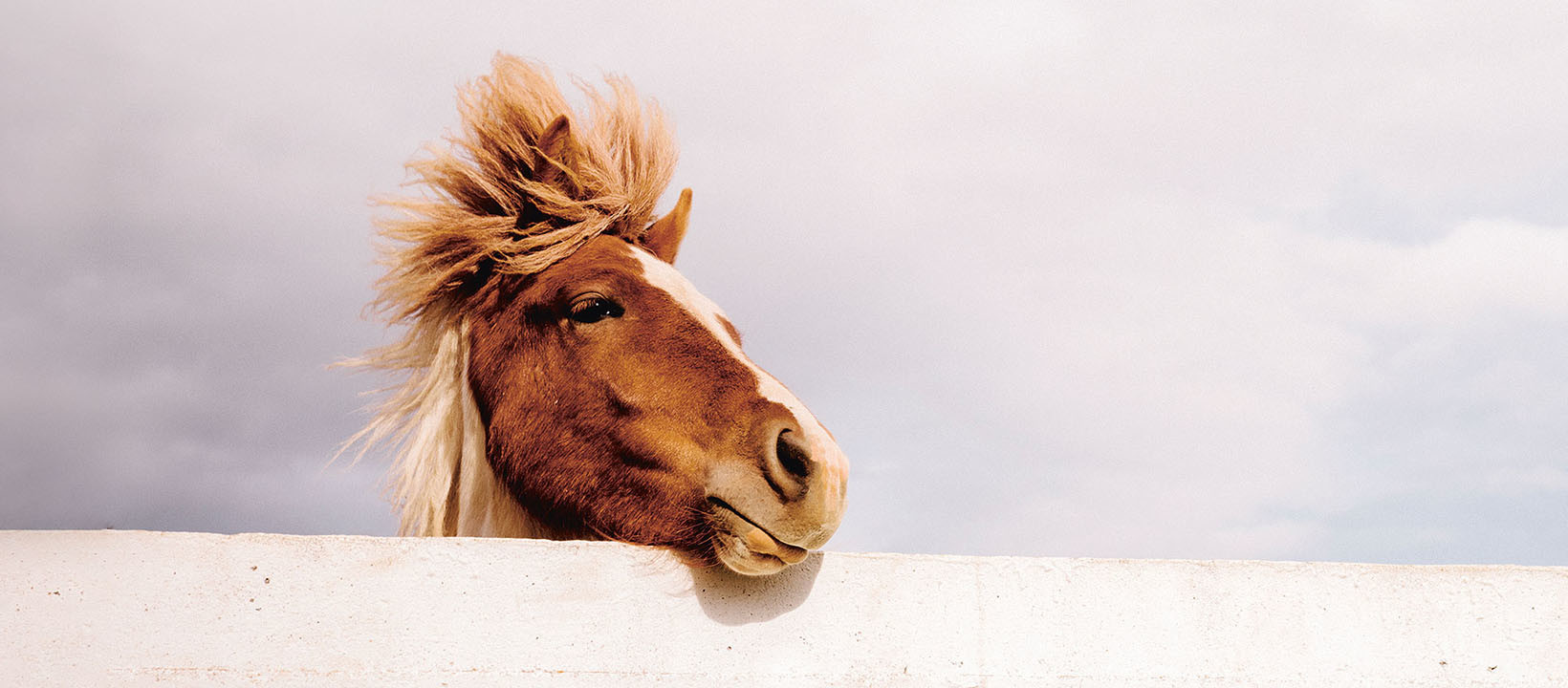 Zahnmedizin bei Pferden