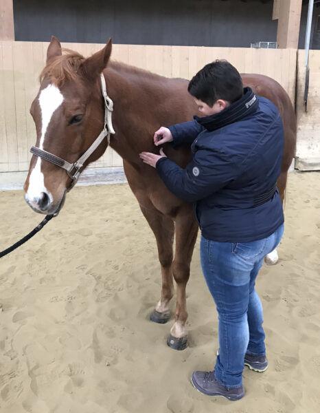 Osteopathie Pferd im Einsatz