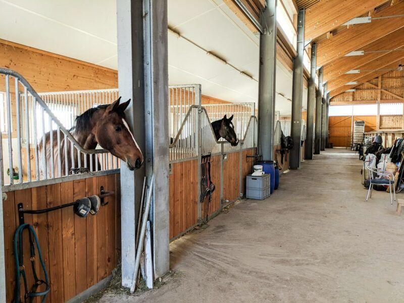 Innenbereich Auslaufboxen Pferdepensionsstall