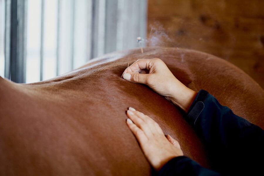 Pferde Komplementärmedizin