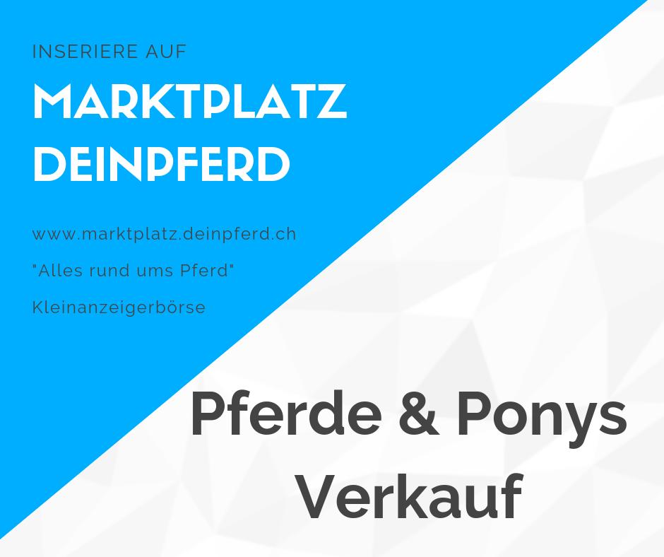 Marktplatz deinpferd.ch