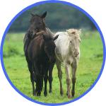 Pferdefohlen