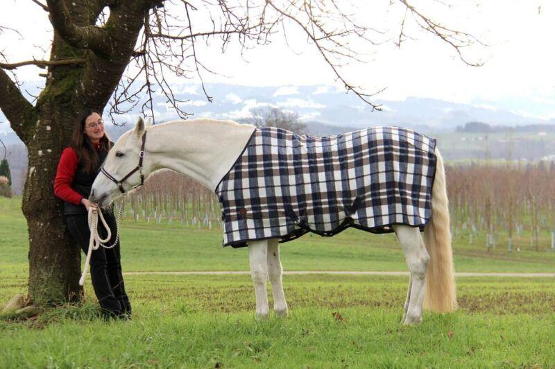 Pferdephysiotherapie