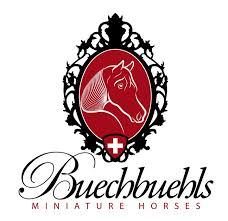 Miniaturpferd Buechbuehls Miniature Horses