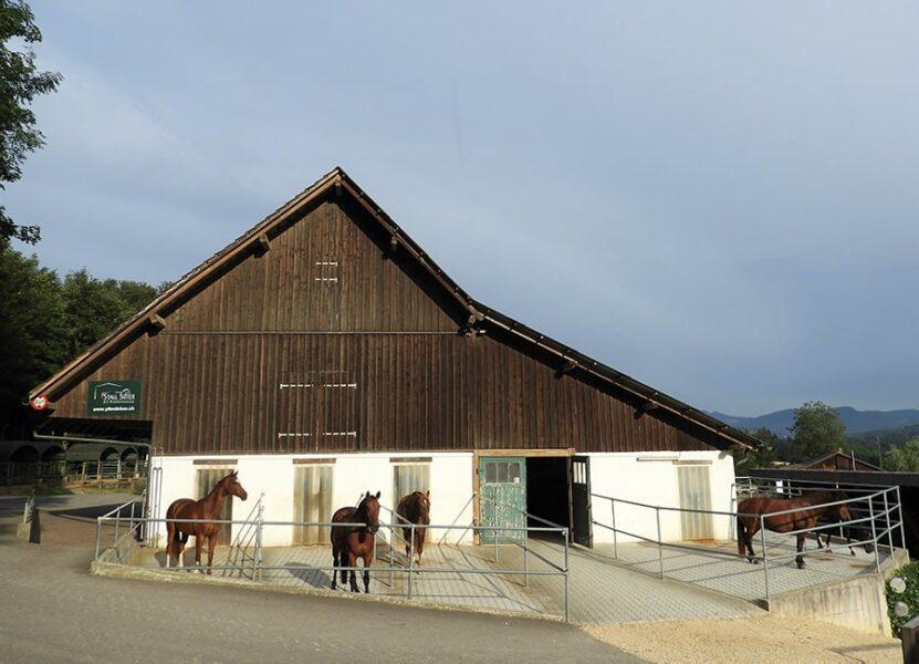 Pferdeboxen mit Auslauf