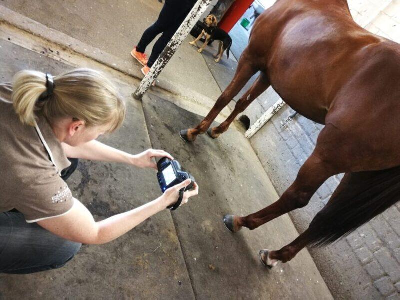 Equine Thermographie im Einsatz