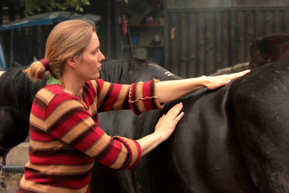 Massage / Ausstreichen des Pferderückens
