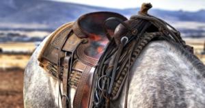 Reitsportartikel bei deinpferd
