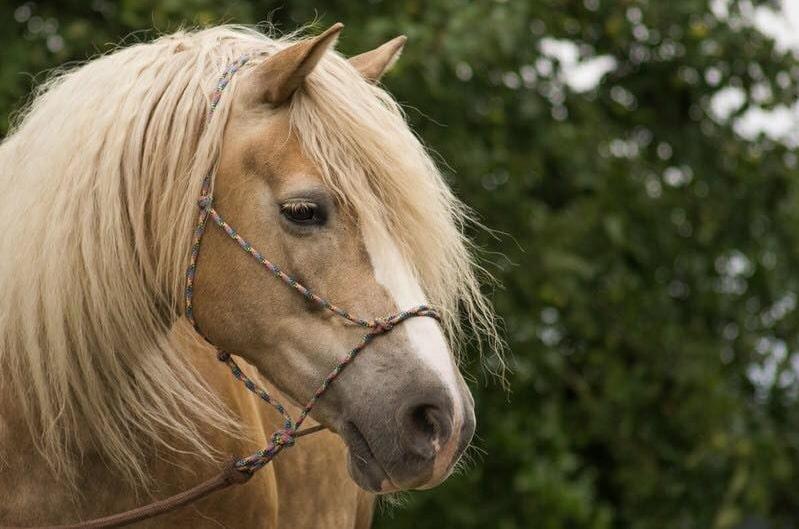 Pferdevermittlung