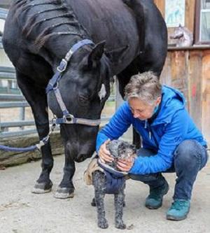 Tier-Pferdekinesiologie