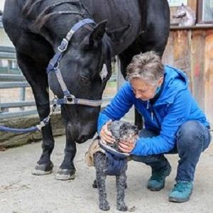 Pferdekinesiologin S. Borghi