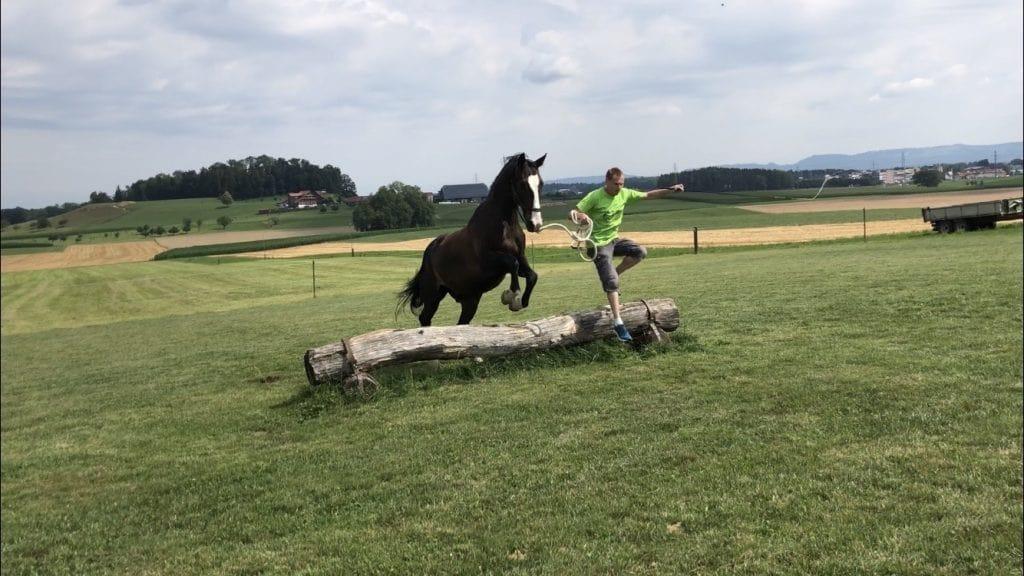 Natural Horsemanship Roland Zoder