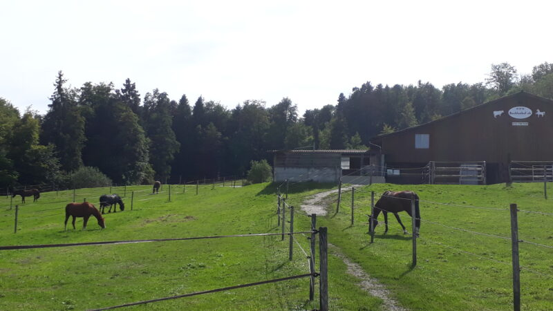 Pensionsstall Bachlenhof